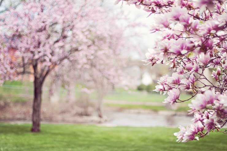 This image has an empty alt attribute; its file name is spring.jpg